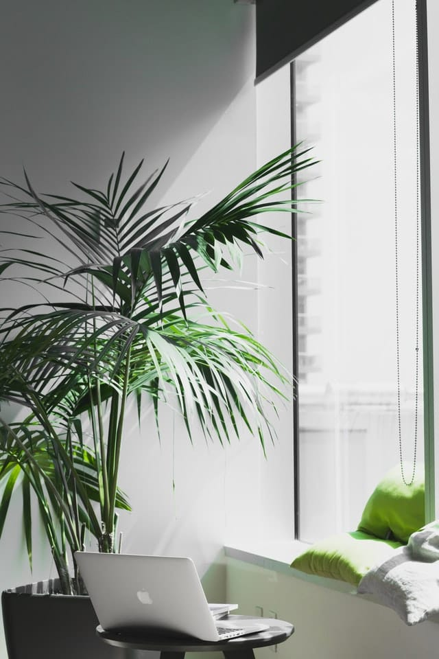 Tall Office Plants